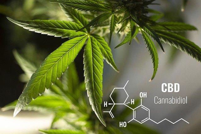 Cannabinoids, Cannabidiol, CBD, THC