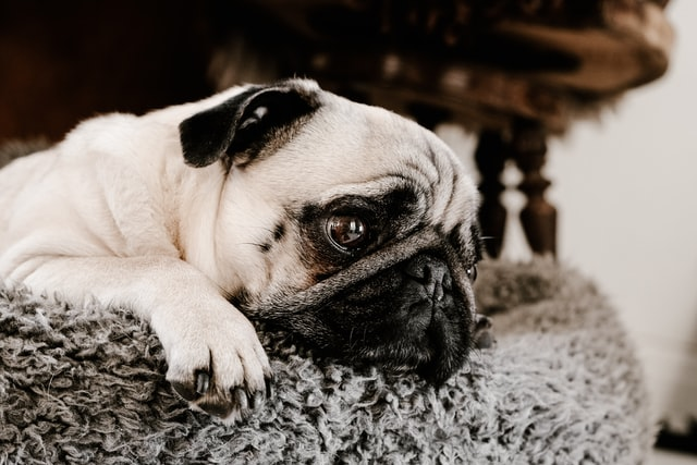 CBD pets, dogs, fireworks, anxiety
