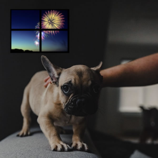 Can CBD Calm Firework Anxiety in Pets?